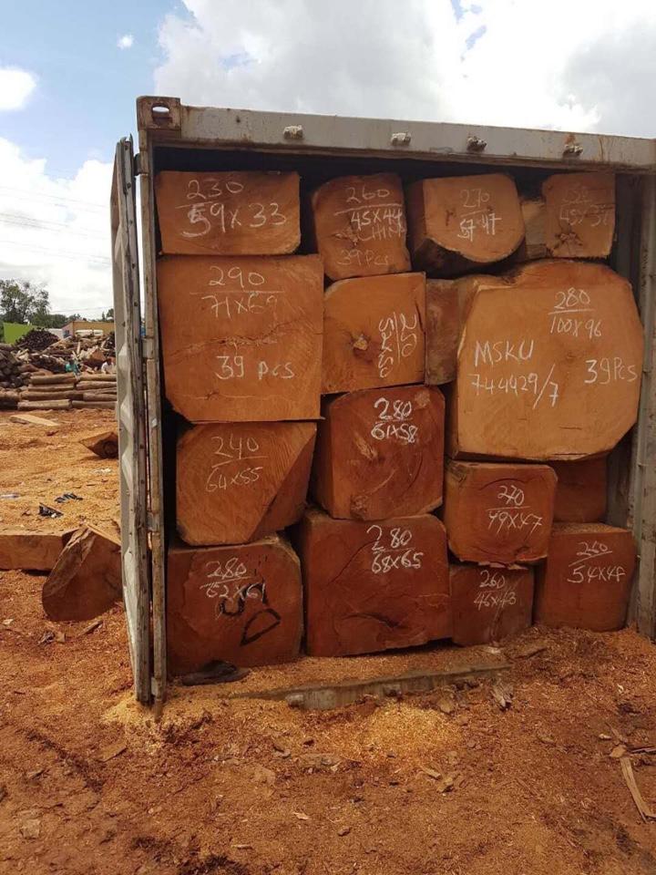 nhập khẩu gỗ lim châu phi